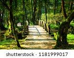 wooden bridge in  forest | Shutterstock . vector #1181999017