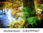 fern in the forest | Shutterstock . vector #1181999467