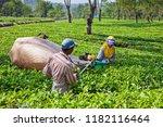 lawang  indonesia   july 16 ... | Shutterstock . vector #1182116464