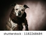 a cute and funny fashion dog....   Shutterstock . vector #1182268684
