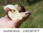 big african snail in the nature | Shutterstock . vector #1182287377