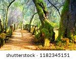 wooden bridge in forest | Shutterstock . vector #1182345151