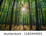 autumn forest trees. nature... | Shutterstock . vector #1182444001