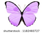 Stock photo purple butterfly isolated on white background 1182483727