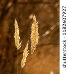 autumn park. back end.  a... | Shutterstock . vector #1182607927