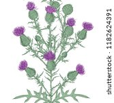 thistle. vector seamless... | Shutterstock .eps vector #1182624391