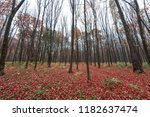 yellow  orange and red autumn... | Shutterstock . vector #1182637474