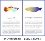 guppy fish and blue striped... | Shutterstock .eps vector #1182756967