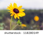 Detailed View Of A Budding And...