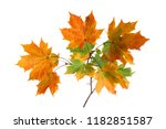 branch of autumn maple leaves... | Shutterstock . vector #1182851587
