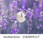 butterfly over lavender flowers.... | Shutterstock . vector #1182859117