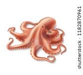 vector realistic octopus. hand... | Shutterstock .eps vector #1182870961