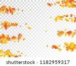 oak  maple  wild ash rowan... | Shutterstock .eps vector #1182959317