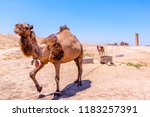 with camel view on foreground... | Shutterstock . vector #1183257391