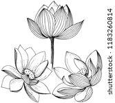 lotus flower. floral botanical ... | Shutterstock . vector #1183260814