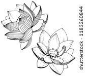 lotus flower. floral botanical ... | Shutterstock . vector #1183260844