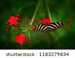 beautiful butterfly zebra... | Shutterstock . vector #1183279834