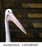 pelican head close up | Shutterstock . vector #1183380187