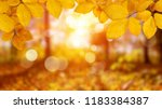 autumn leaves on the sun. fall... | Shutterstock . vector #1183384387
