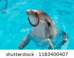 happy smiling bottlenose... | Shutterstock . vector #1183400407