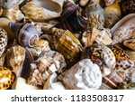 detail on marine shells | Shutterstock . vector #1183508317