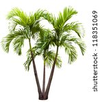 betel palm tree isolated on... | Shutterstock . vector #118351069