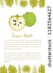 sugar apple  sweetsop  or... | Shutterstock .eps vector #1183564627