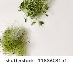onion and sunflower sprouts on... | Shutterstock . vector #1183608151
