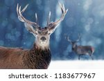 Proud Noble Deer male in winter snow forest. Winter christmas image.