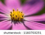 flower background for greetings ...   Shutterstock . vector #1183703251