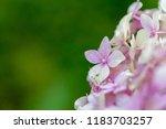 flower background for greetings ...   Shutterstock . vector #1183703257