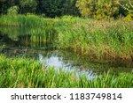 beautiful summer autumn water...   Shutterstock . vector #1183749814