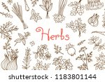 background with various herbs... | Shutterstock .eps vector #1183801144