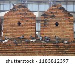 pigeons perched on the brick...   Shutterstock . vector #1183812397