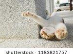 little cat sleep in a funny... | Shutterstock . vector #1183821757
