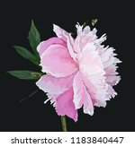 a picturesque peony flower.... | Shutterstock .eps vector #1183840447