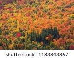 forest landscapes of brilliant... | Shutterstock . vector #1183843867