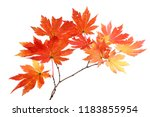 autumn maple leaves | Shutterstock . vector #1183855954