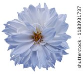 Flower Isolated. Light Blue...