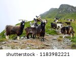 a herd of goats grazing under... | Shutterstock . vector #1183982221