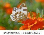 close up of eastern bath white... | Shutterstock . vector #1183985617
