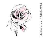 Rose Flower Vector Drawing...