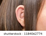 ears protruding from under the... | Shutterstock . vector #1184062774