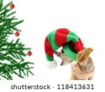 a chihuahua dressed up in a christmas santa claus hat - stock photo
