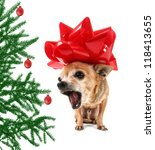 a chihuahua dressed up in a christmas bow - stock photo