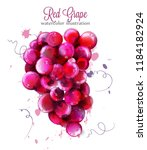 red grapes watercolor vector.... | Shutterstock .eps vector #1184182924