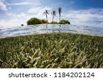 a shallow seagrass meadow... | Shutterstock . vector #1184202124