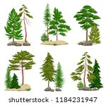 set of realistic pine forest...   Shutterstock .eps vector #1184231947