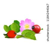 beautiful fragrant rosehip.... | Shutterstock .eps vector #1184244067