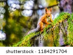Squirrel On Tree Branch....